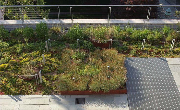 Virginia Commonwealth University Pollak Building Green Roof - VMDO ...