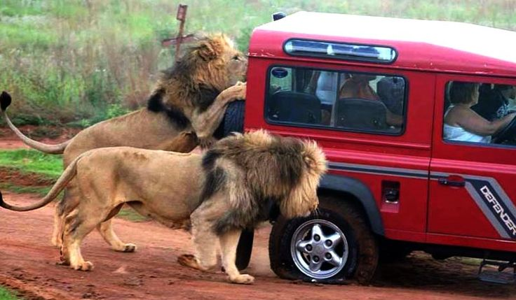 On a Safari with danger? Learn how to set the right boundaries for every circumstance. Learn how to stop attracting it into your life.Get free of codependency with being a victim.