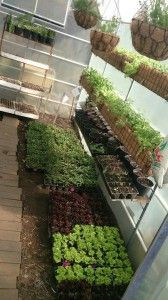 Great use of Vertical Gardening in this greenhouse by Urban Freedom.  OZCF, Cape Town, South Africa. http://urbanfreedom.co.za