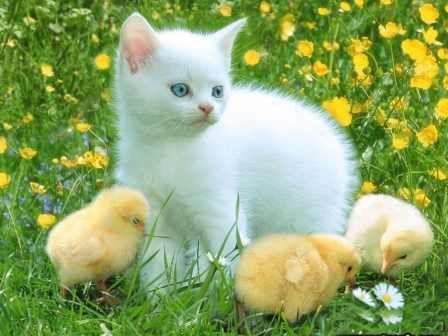 4 cute