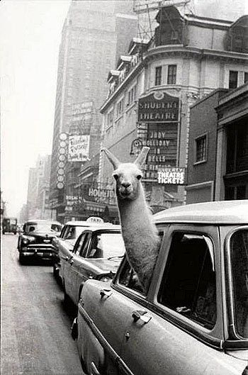 Inge Morath, West 44th Street, NY, 1957.   Weird And Wonderful - you don't see that everyday :D