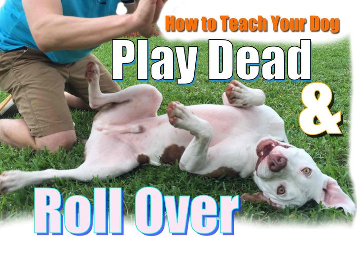 how to teach your dog to roll over in nintendogs