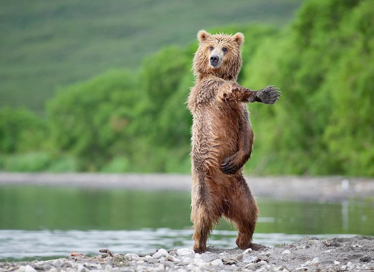 Now pay close attention. I'm only showing the steps of the macarena once.