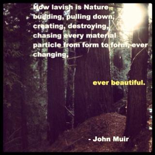 Great John Muir Quotes Quotesgram