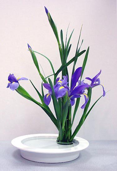 Ikebana Class   #iris                                                                                                                                                     More