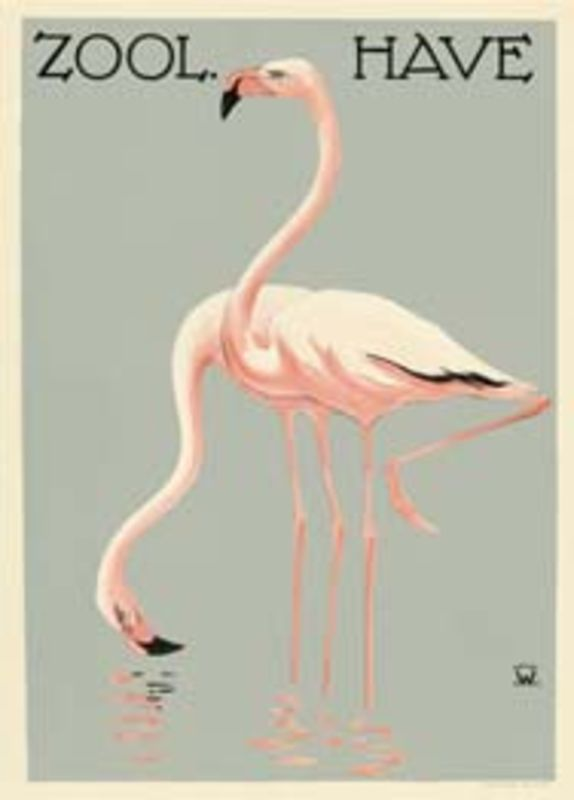 Zoo Poster Flamingo