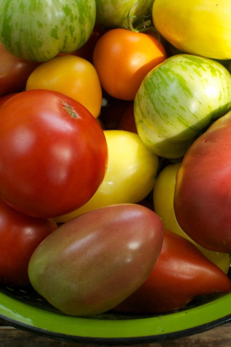 Organic Heirloom Tomato Gardening Seeds SIX Pack