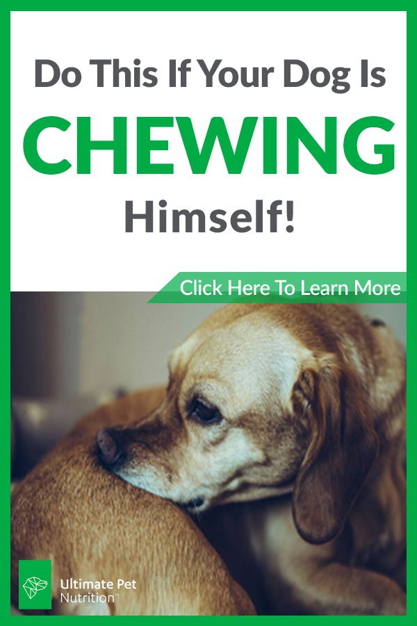 Is Your Dog Chewing Himself Watch This Dogs Baby Dogs