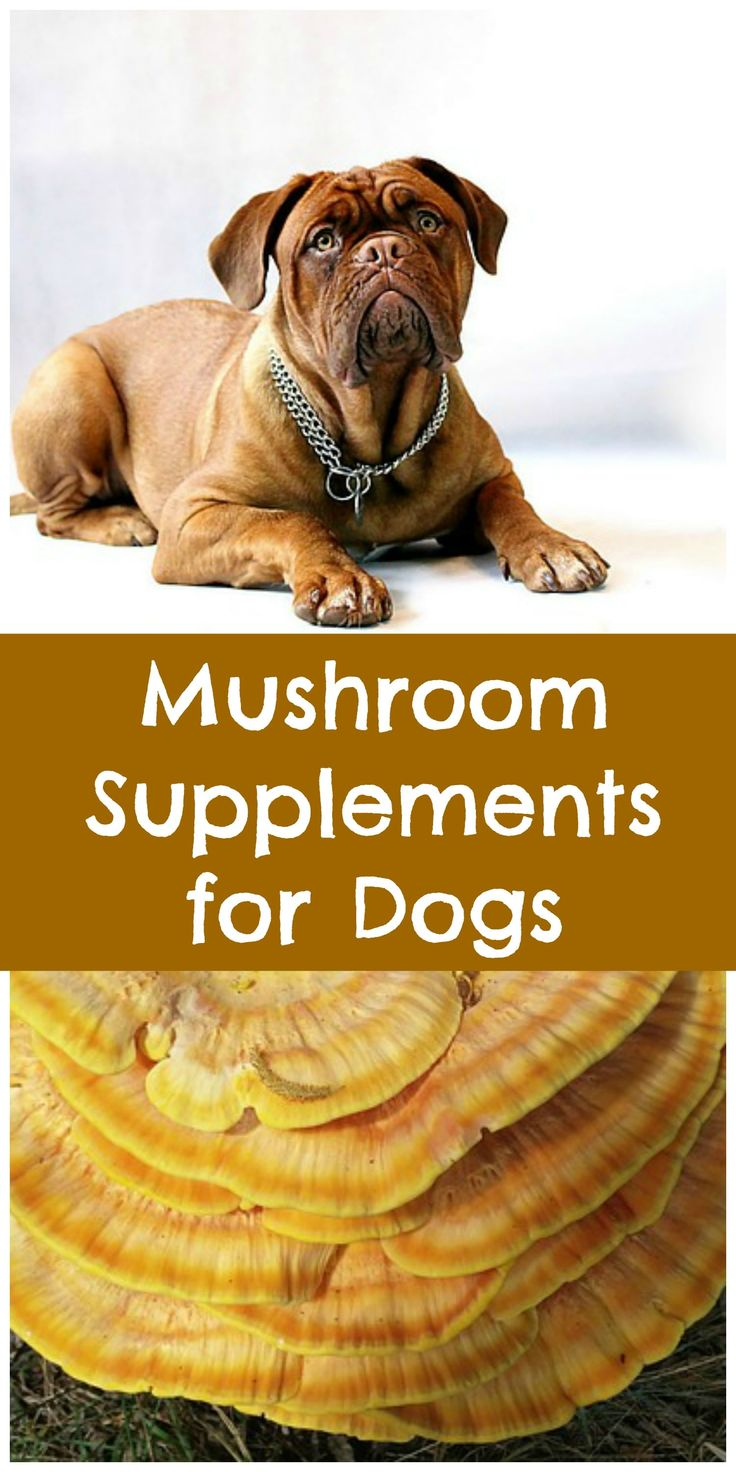 Natural Remedies For My Dogs Senility