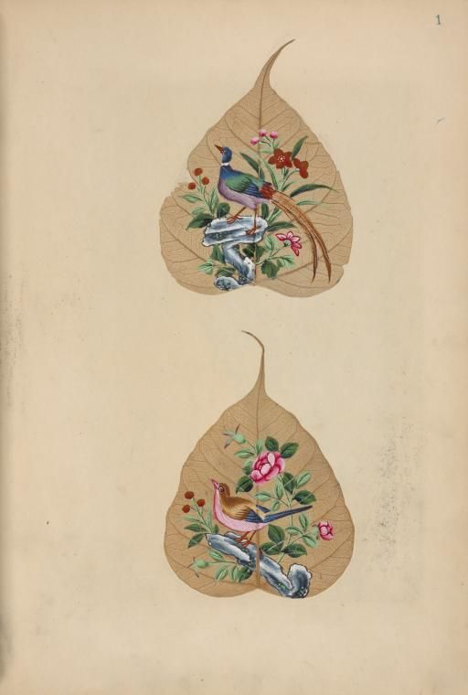 "The Miriam and Ira D. Wallach Division of Art, Prints and Photographs: Art & Architecture Collection, The New York Public Library. ""Four butterflies with eggs, larvae, and moths."" The New York Public Library Digital Collections. 1850. http://digitalcollections.nypl.org/items/510d47e3-0f2c-a3d9-e040-e00a18064a99"