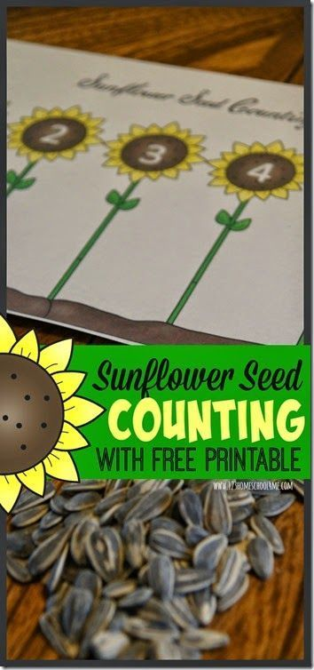 Sunflower Seed Counting Activity