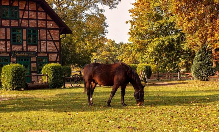 Na konie do Grabskiego Sioła