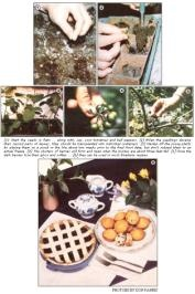 Garden huckleberries - recipes and how to can...