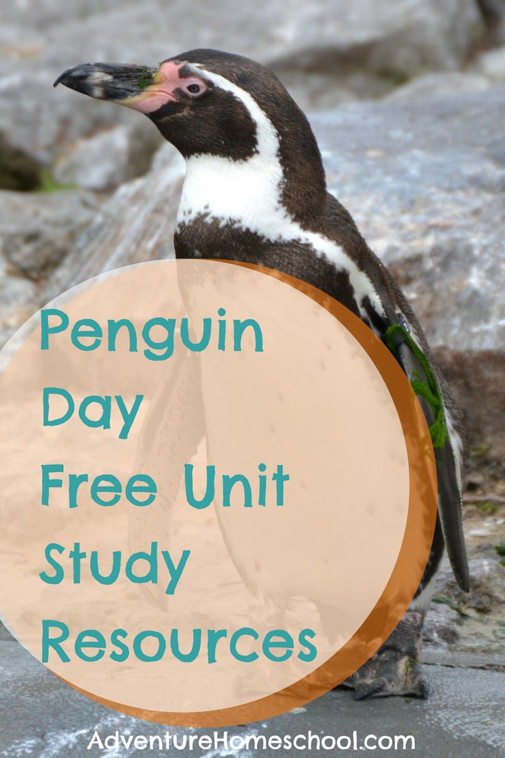 Free Penguin Unit Study Resources #byb2017 #homeschool #freebie