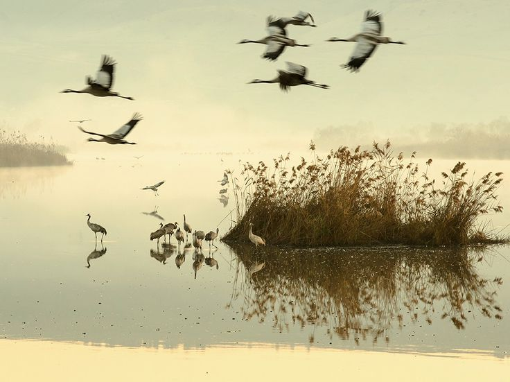 Cranes Image, Israel |National Geographic Photo of the Day
