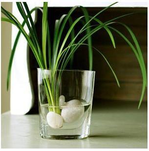 best 25 water plants indoor ideas on pinterest water plants indoor water garden and plants. Black Bedroom Furniture Sets. Home Design Ideas
