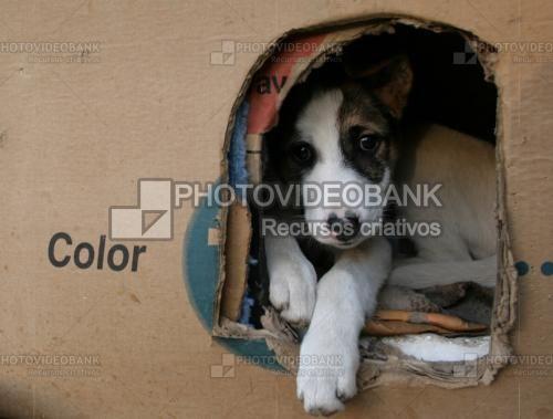 Cachorro de rua encontra abrigo em uma caixa de TV | PHOTOVIDEOBANK Cachorro de rua encontra abrigo em uma caixa de TV, em Bucarest, capital da Romênia. Filhote abandonado, sem abrigo, resgate de cães abandonados. Filhotes fofinhos, animais de rua.Foto: DaBrick