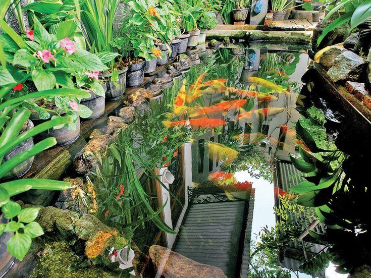Les 25 meilleures id es concernant bassin carpe koi sur for Plante verte japonaise