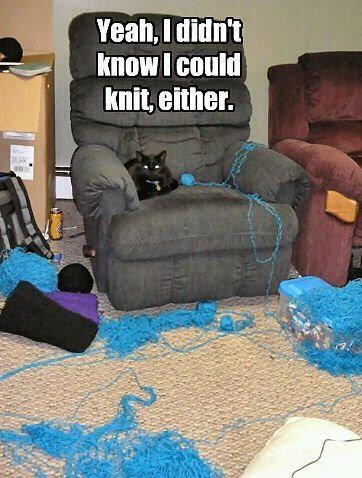 Image result for yeah i didn't know i could knit either