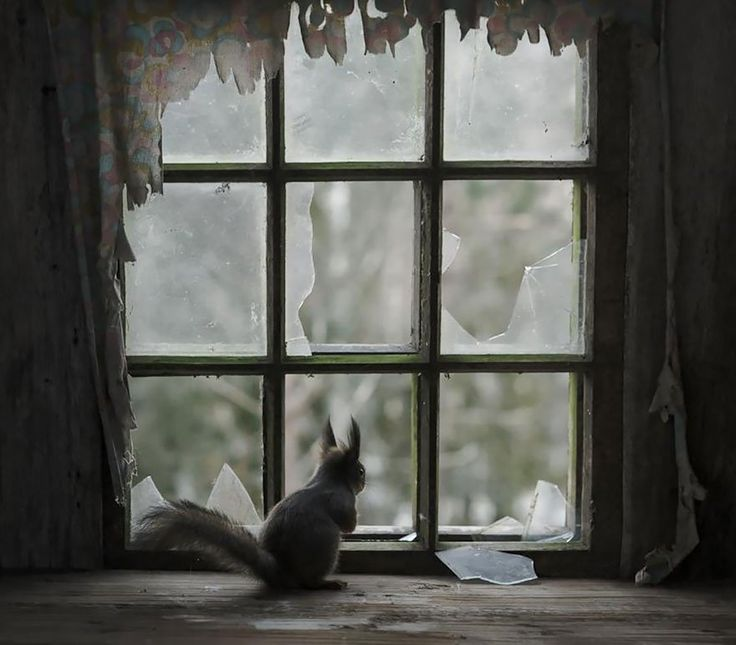 Un Ecureuil à la Fenêtre - Que ce soit un Animal Domestique attendant tranquillement le retour de son propriétaire, ou un Animal Sauvage investissant les lieux d'une maison abandonnée, les fenêtres sont de véritables passerelles vers le monde extérieur, inspirant ainsi attente et curiosité.