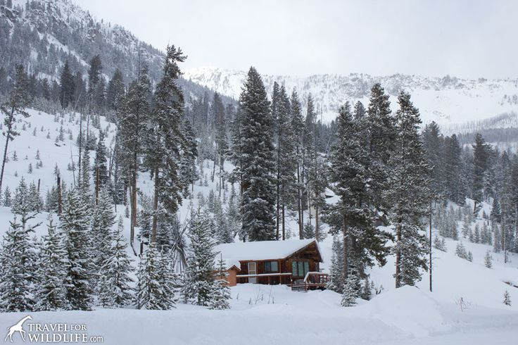 Return to your cozy cabin at the end of an adventure day in one of the Yellowstone vacation rentals©TravelForWildlife
