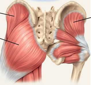 How to Use a Lacrosse Ball for Hip and Glute Mobility