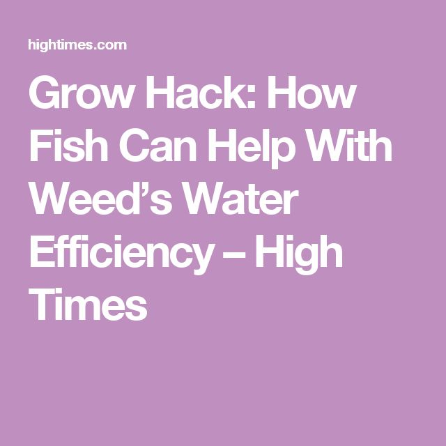 Grow Hack: How Fish Can Help With Weed's Water Efficiency – High Times