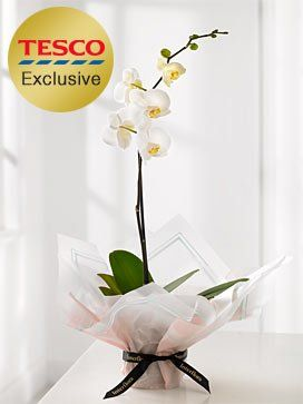 Gift Wrapped Orchid