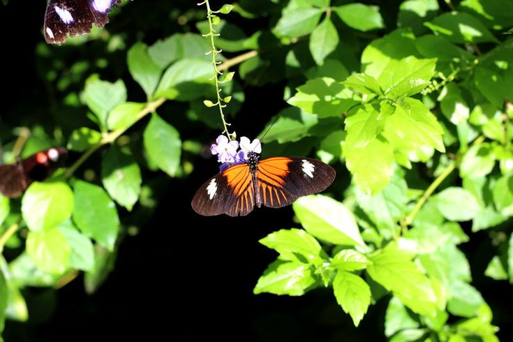 Butterflies at Butterfly Wonderland in Scottsdale, Arizona.