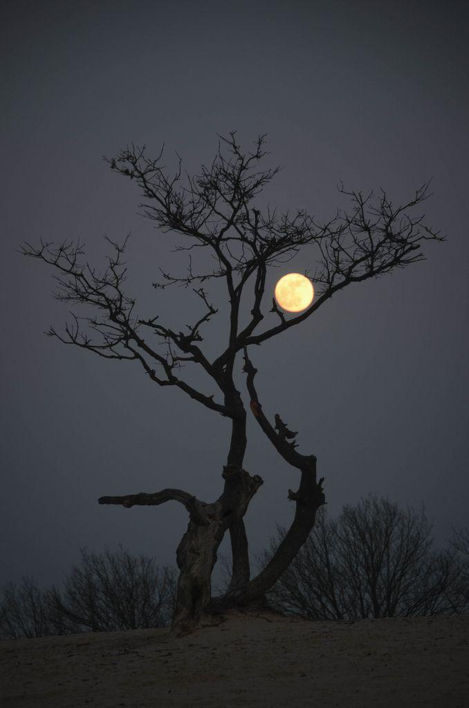 ✯ Moon and Tree...