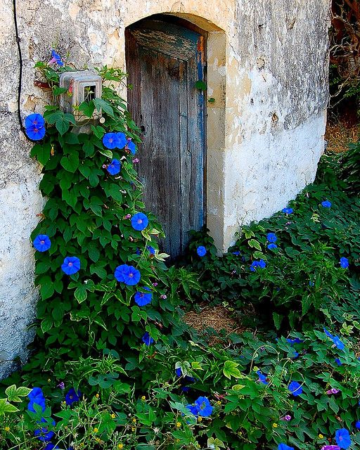 Morning Glory: Blue Flowers, Mornings Glories, Rustic Doors, Flowers Vines, Gardens Gates, Gardens Spaces, Real Beautiful, Greek Islands, Blue Mornings