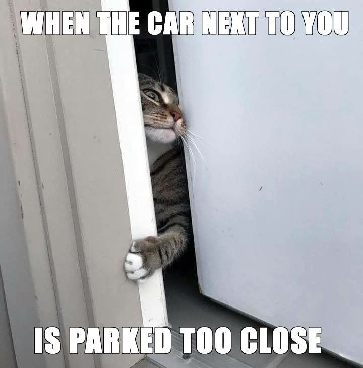 #CarMemes #ParkingIssues #Cat