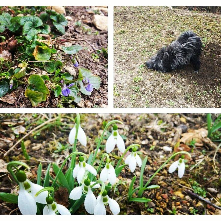 Biztos vagyok benne hogy mamámnál idén is pompázni fog a kert. :) Már most is előbújtak az első tünemények. Bojti kutya pedig segít a kertészkedésben. ;)