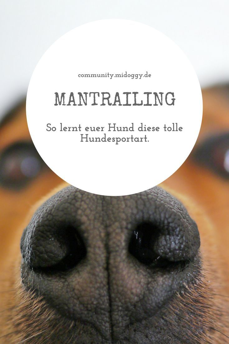 Ein Malteser Geht Trailen Hundesport Hunde Und Rettungshunde