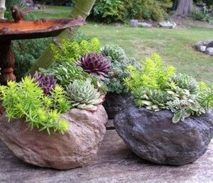 Hypertufas with succulents