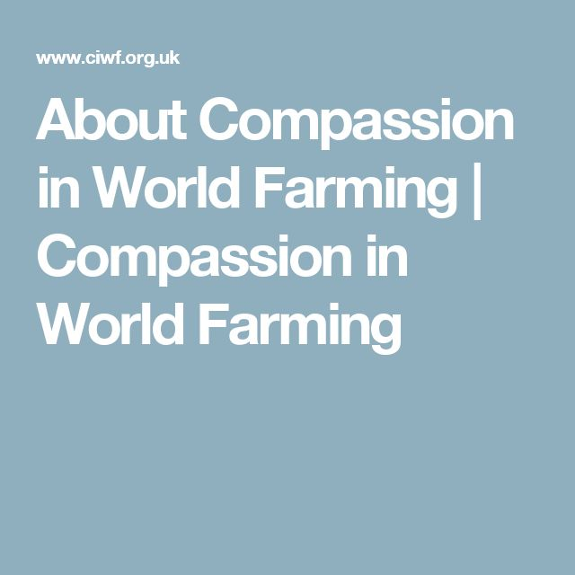 About Compassion in World Farming | Compassion in World Farming