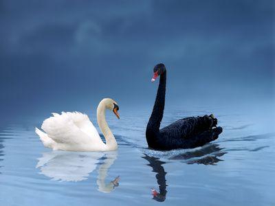 La felicidad es un cisne negro. ¿Eres feliz por lo que tienes o por lo que eres? Manual de la Felicidad.