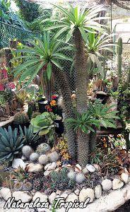 Desierto hermoso para la decoración en nuestro jardín