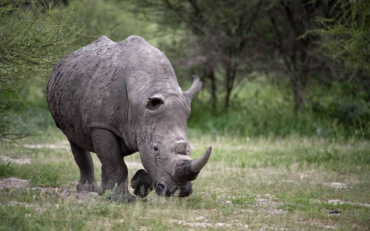 Free download rhino picture, Hastings London 2017-03-10