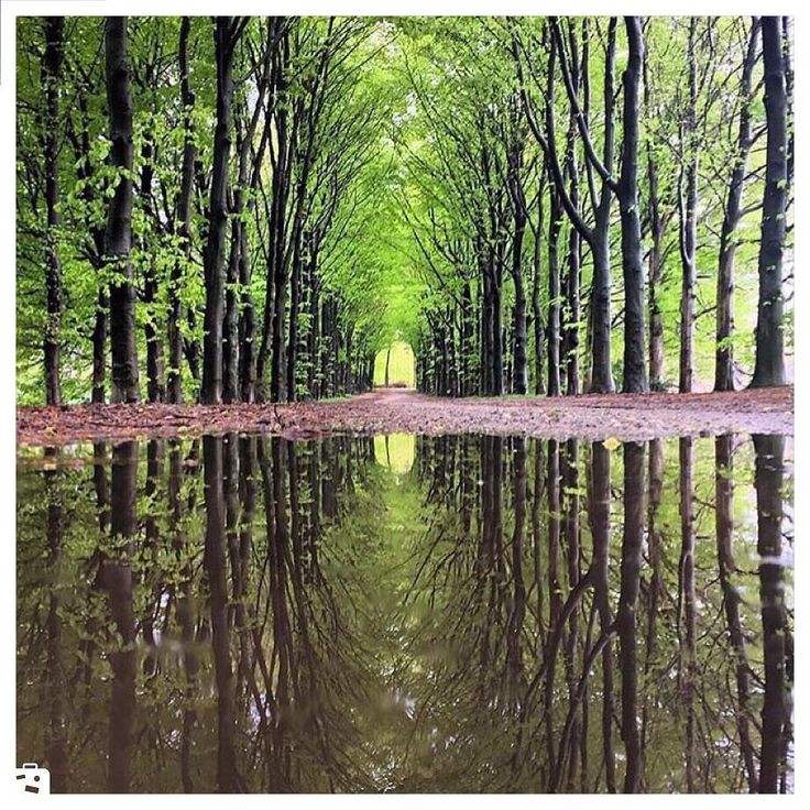 - -Netherlandsهلند .  #netherlands #chamedoon #wiki #wikievent  #هلند  #ويكي #ويكي_ايونت #چمدون  #كجا_بريم www.wikievent.net