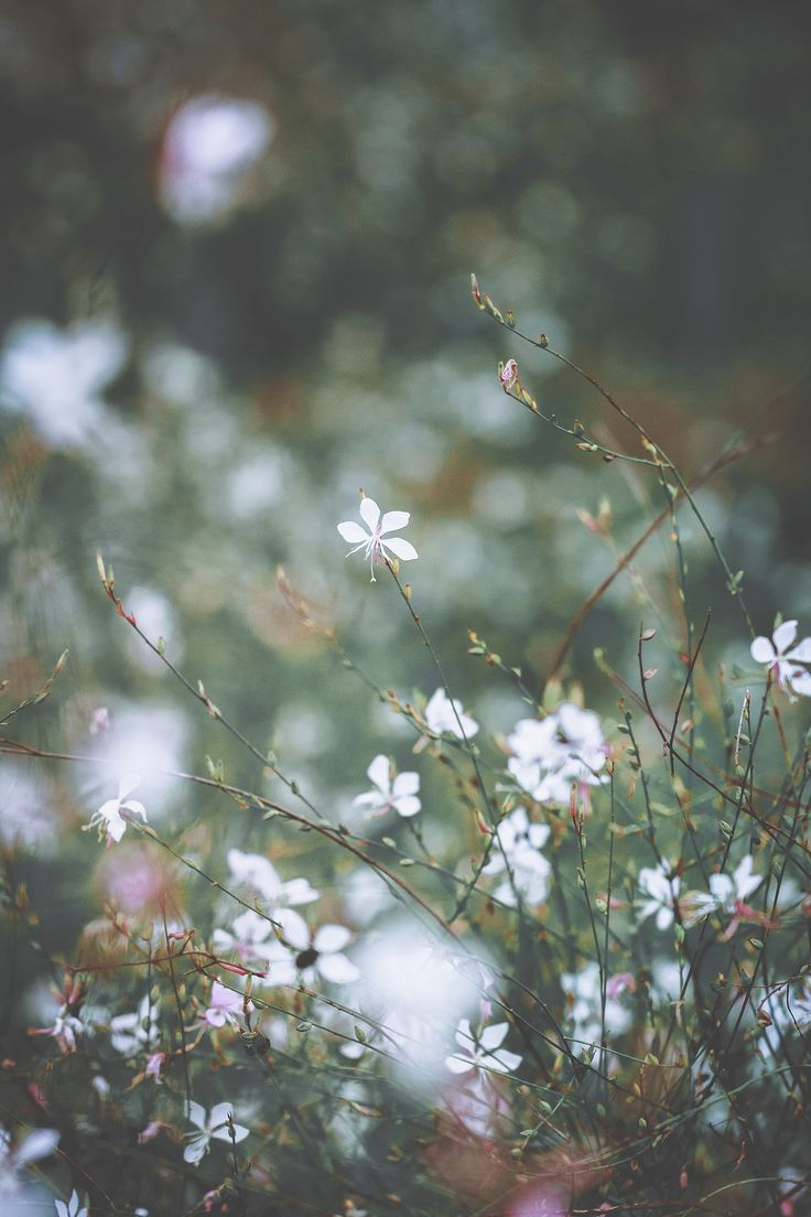 wildflowers | flower + nature photography