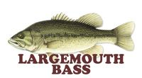 Largemouth Bass Fishing Tips, fishing tips by species, tips, tackle, forecast in Ohio #wildohio