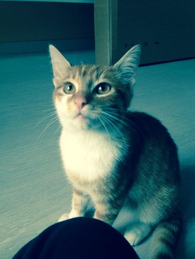 Onze kat Sam !