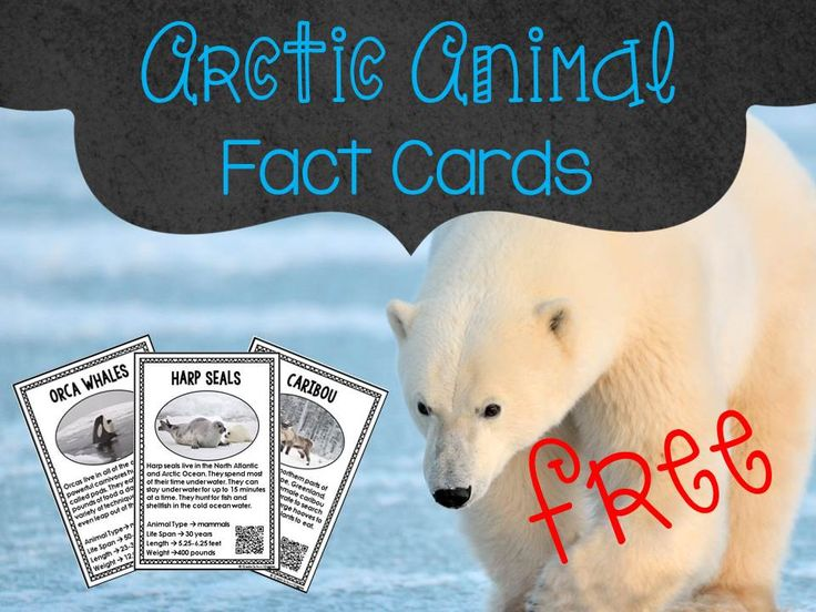 Whoohoo! Arctic animals are so much fun to learn about. The sensory exploration is a great hook and the FREE Arctic Animal Fact Cards with QR codes are great for integrating reading, science, and technology.
