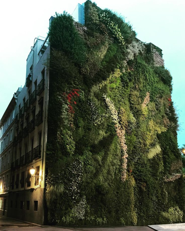"20 Likes, 2 Comments - Petra Marques (@petrajamarques) on Instagram: ""#thepowerofnature #greenwall #cityforrest"""