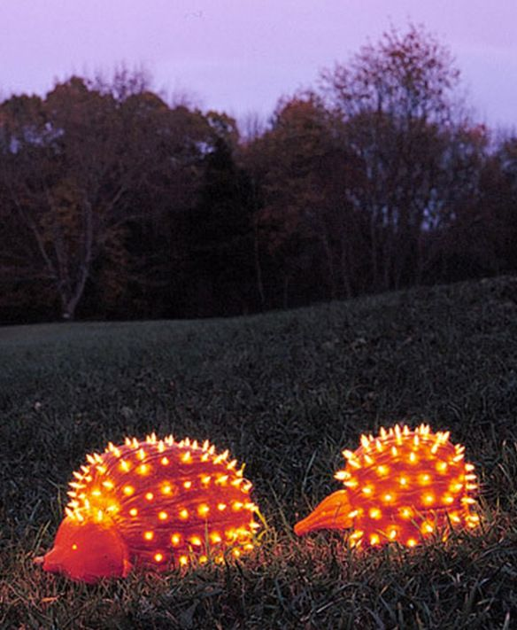 Hedgehog jack-o-lanterns! Plus 9 other animal-themed pumpkins from The Top 10 of Anything and Everything