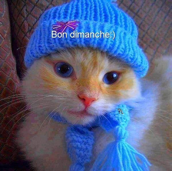 Bon DIMANCHE 2631bc9aae399fbd0ce462b1ed3167a5--shower-cap-google-images