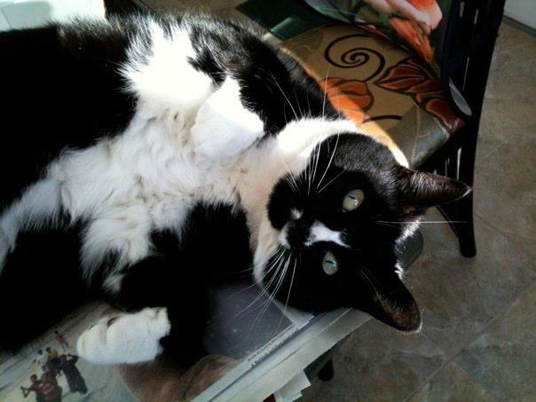 9 Ways to Lose 5lb in a Week Cat adoption, Lost cat