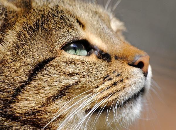 Cómo saber si mi gato está enfermo - 10 pasos - unComo