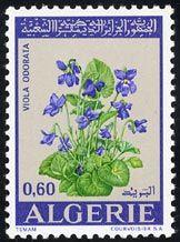Viola odorata, postal stamp  Algerie (1972)